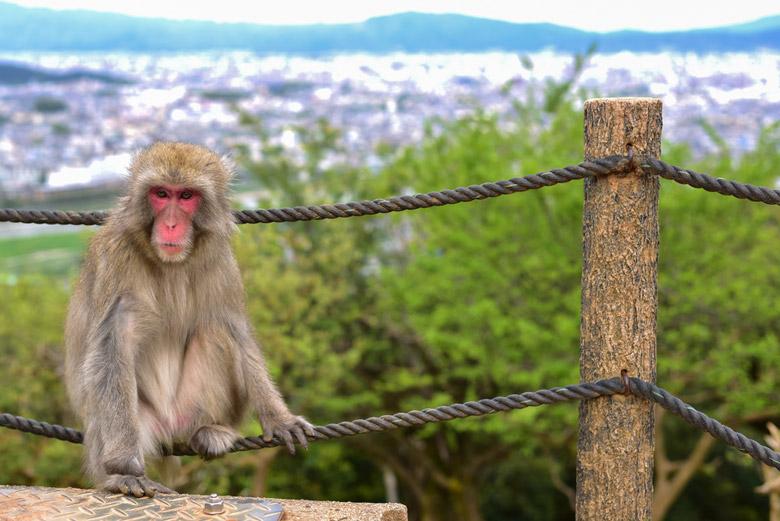 Iwatayama Monkey Park in Kyoto