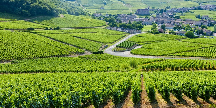Winelands of Burgundy
